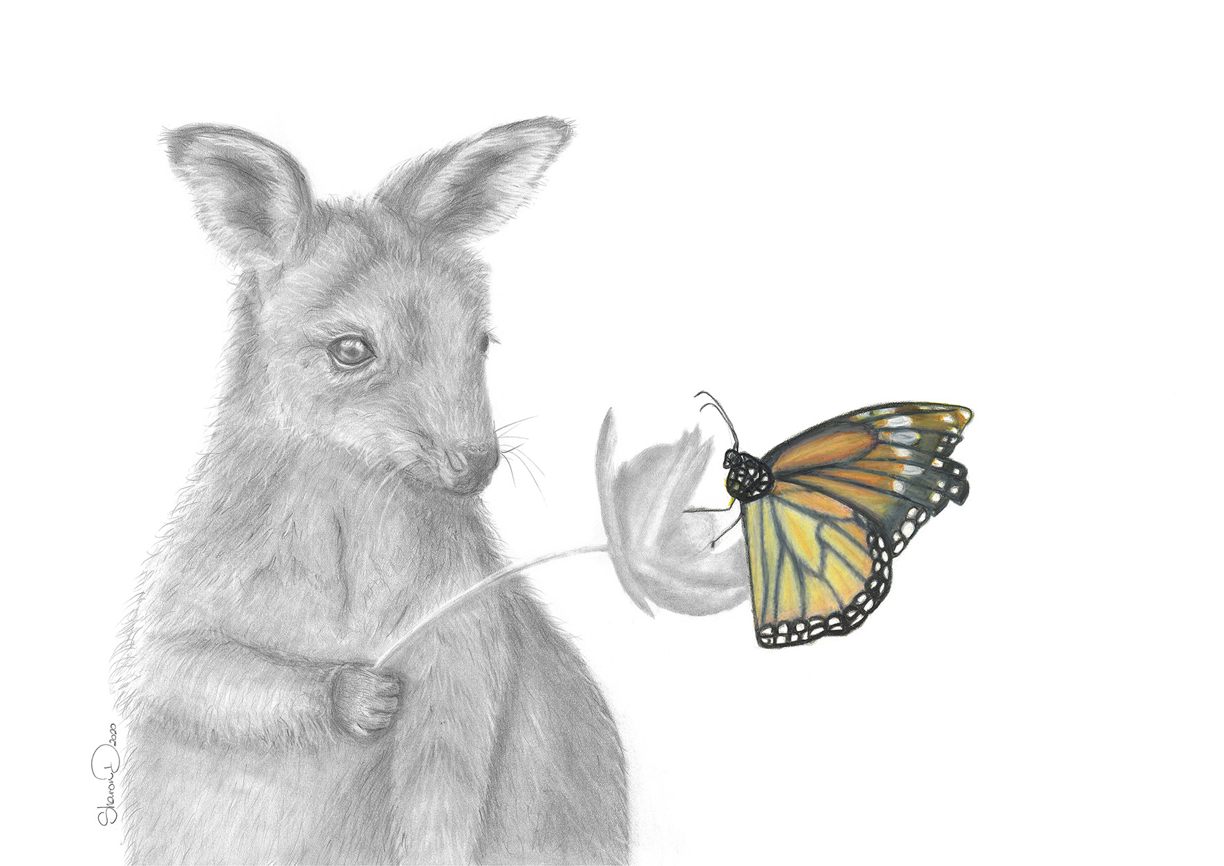 12919 Sharon Dawson Wallaby FF 420x297 print web