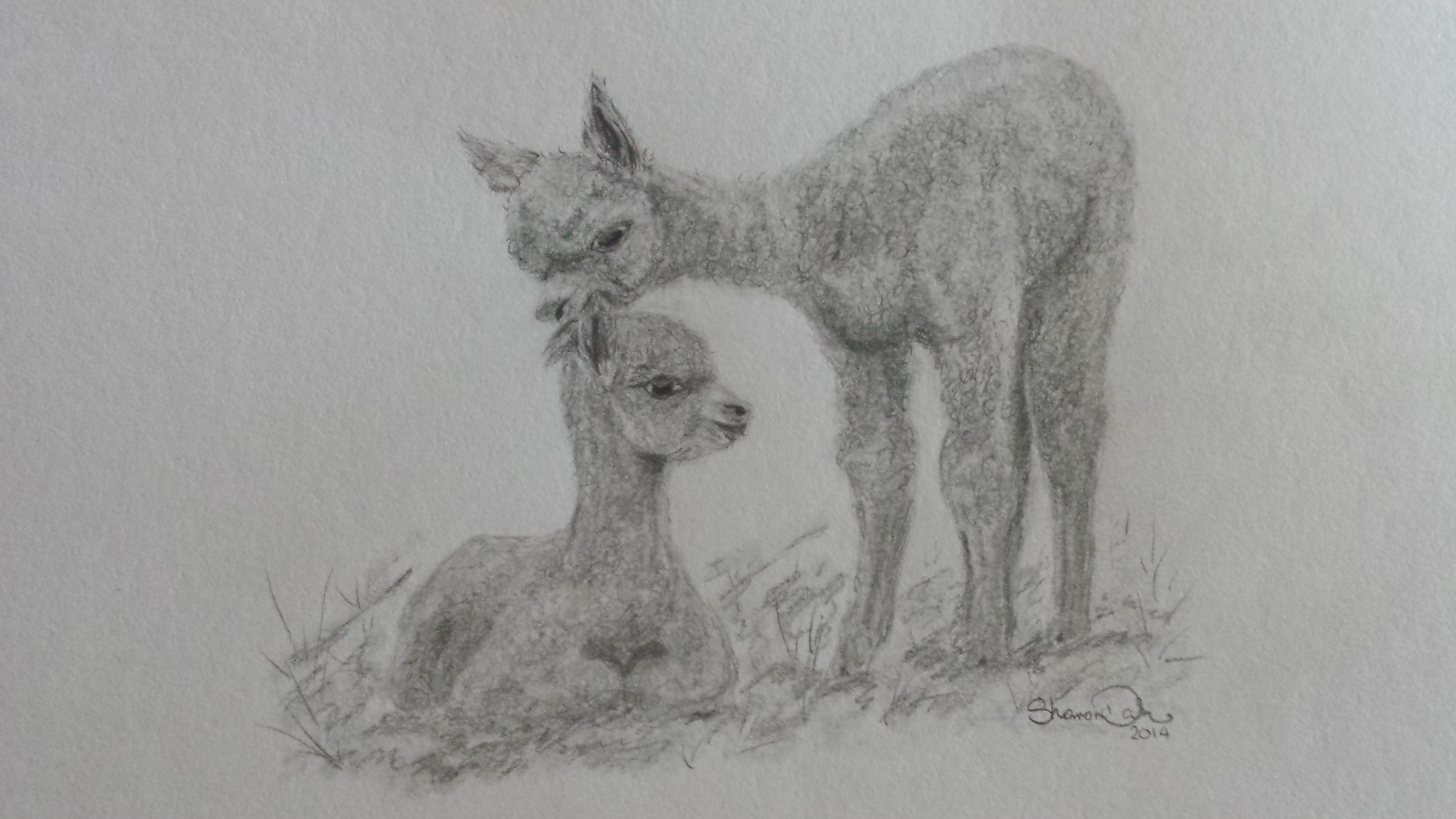 Cria drawing